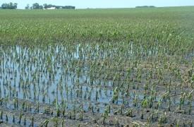 Landbouwschade (regen)
