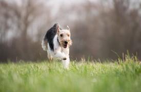 Hondenspeelweide2